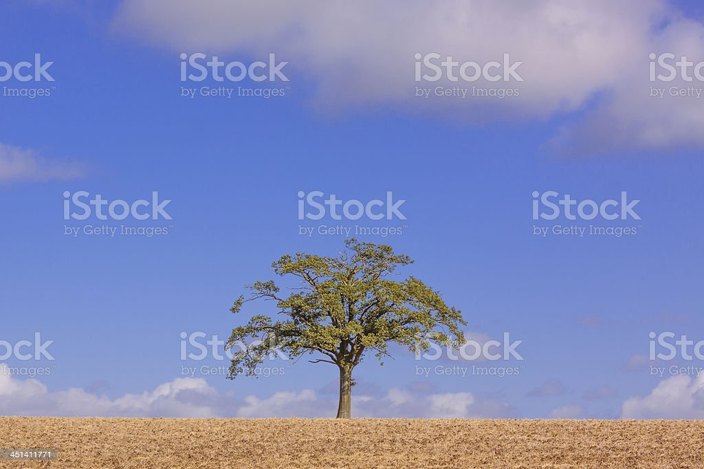 Lone Tree in Ploughed Field stock photo