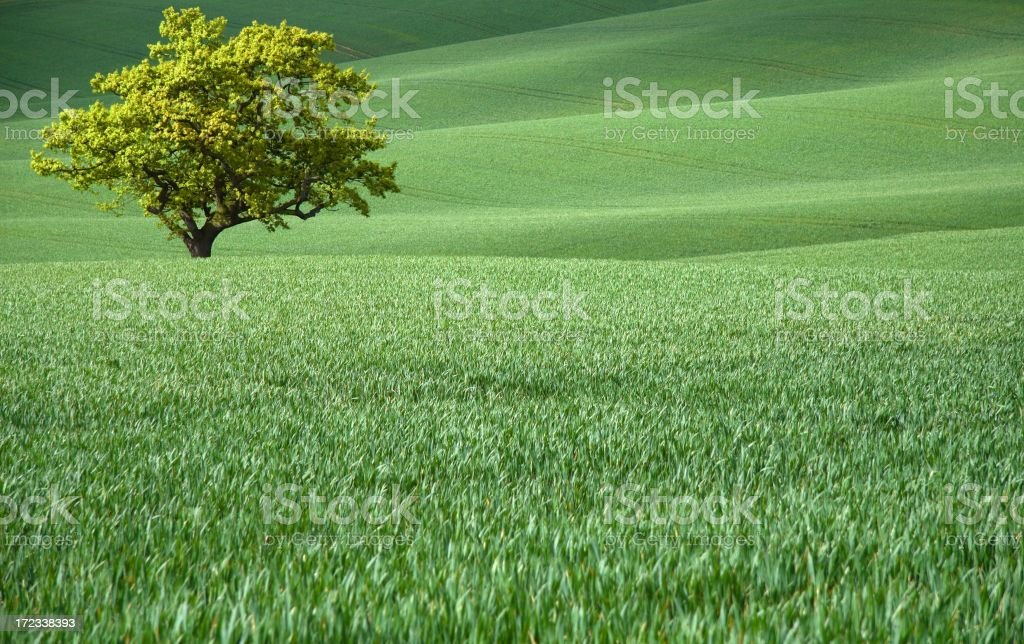 Lone tree in rolling farmland royalty-free stock photo
