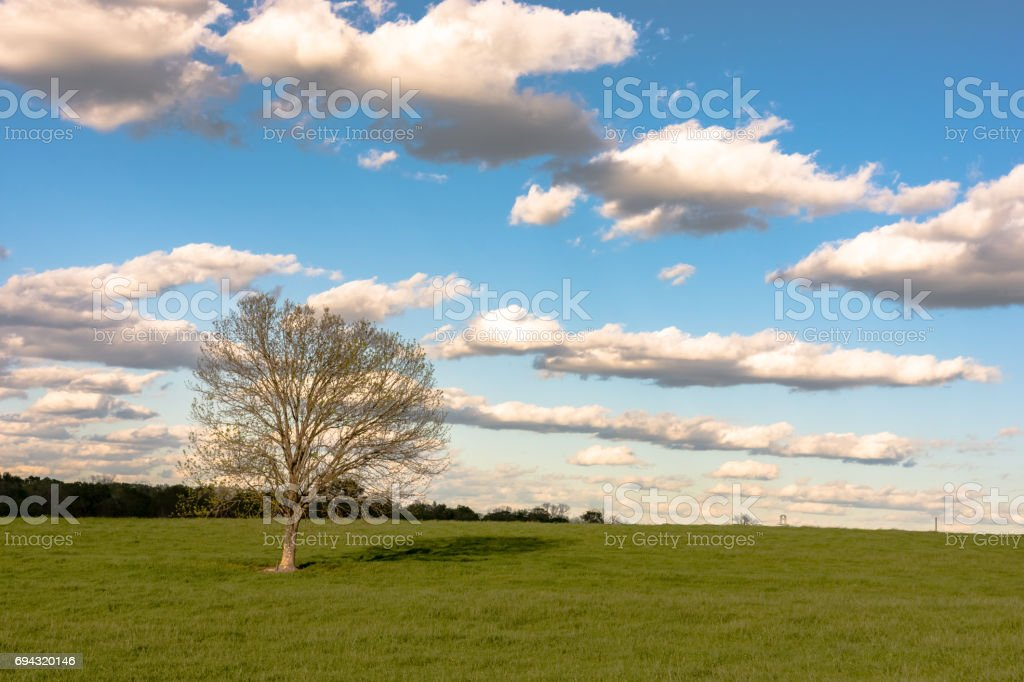Lone tree in spring pasture background stock photo