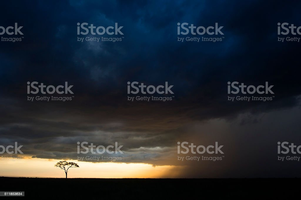 Lone tree in storm stock photo