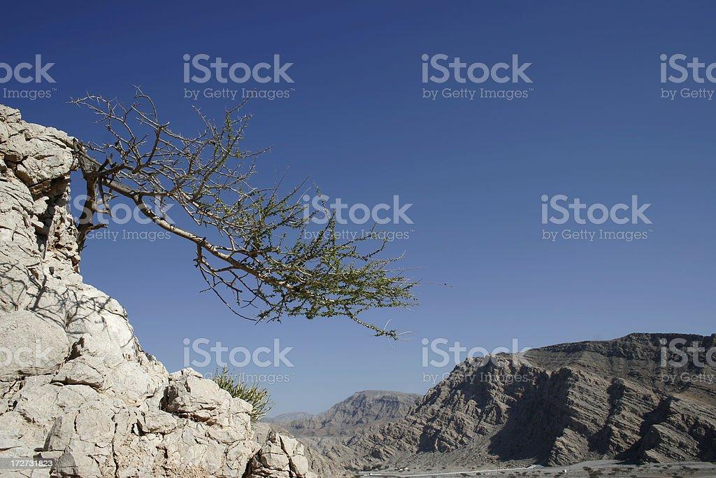 Lone Tree in the Desert stock photo