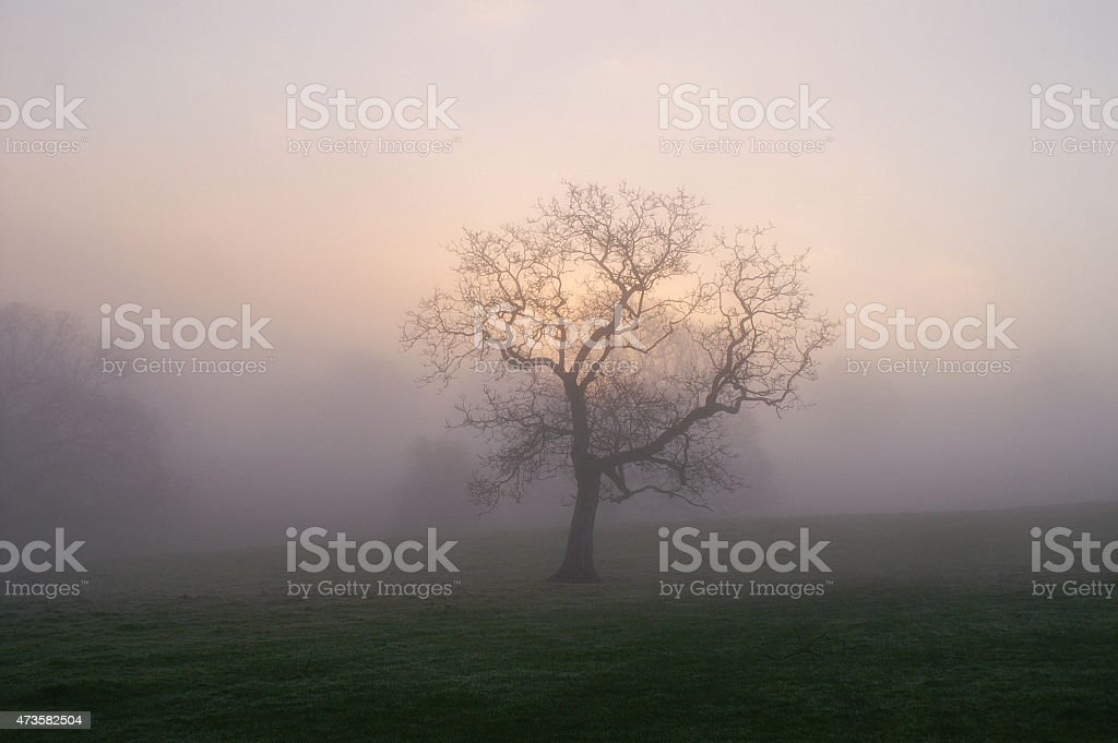Lone tree in the early morning spring mist stock photo