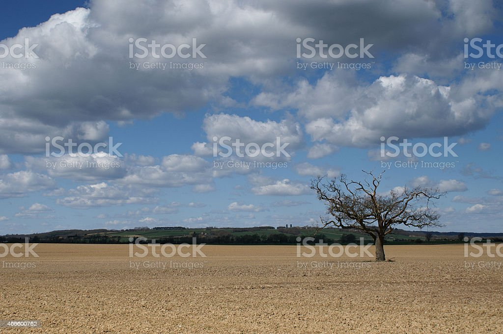 Lone tree in the English countryside stock photo