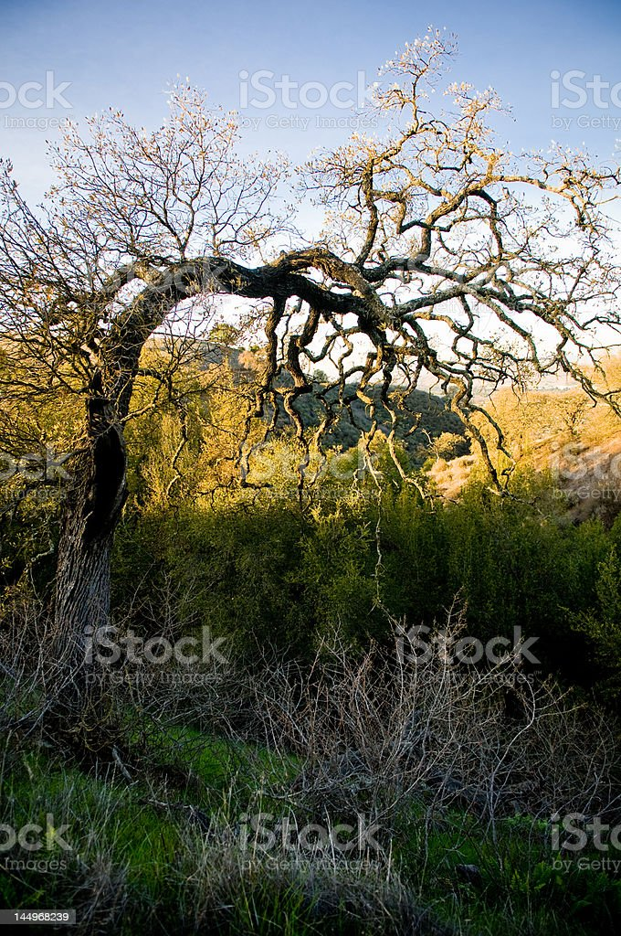 Lone tree in the middle of winter with fall colors stock photo