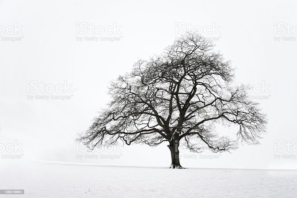 Lone Tree in the Snow royalty-free stock photo