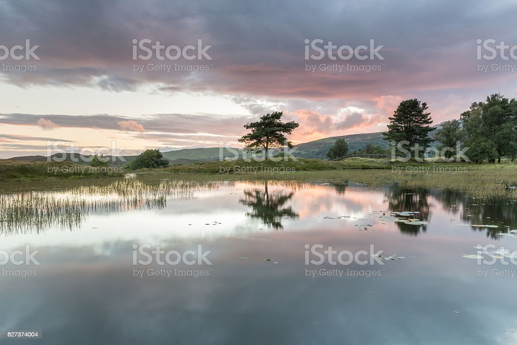Lone tree, Kelly Hall tarn in the UK Lake District stock photo