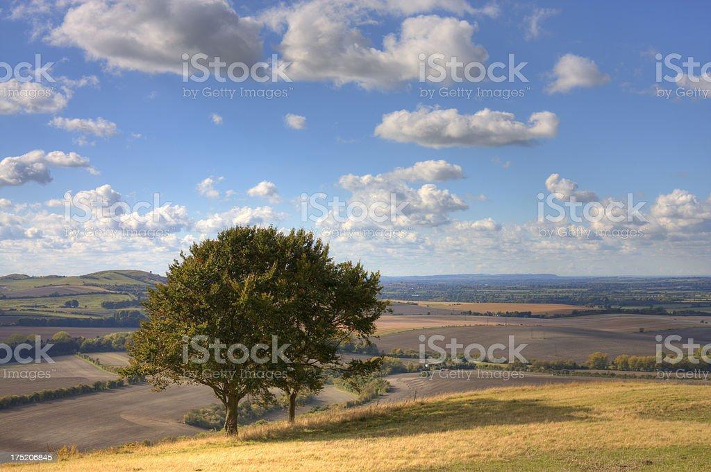 Lone tree on a hillside stock photo