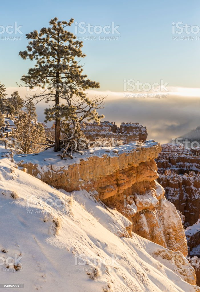 Lone Tree on Bryce Canyon Rim stock photo