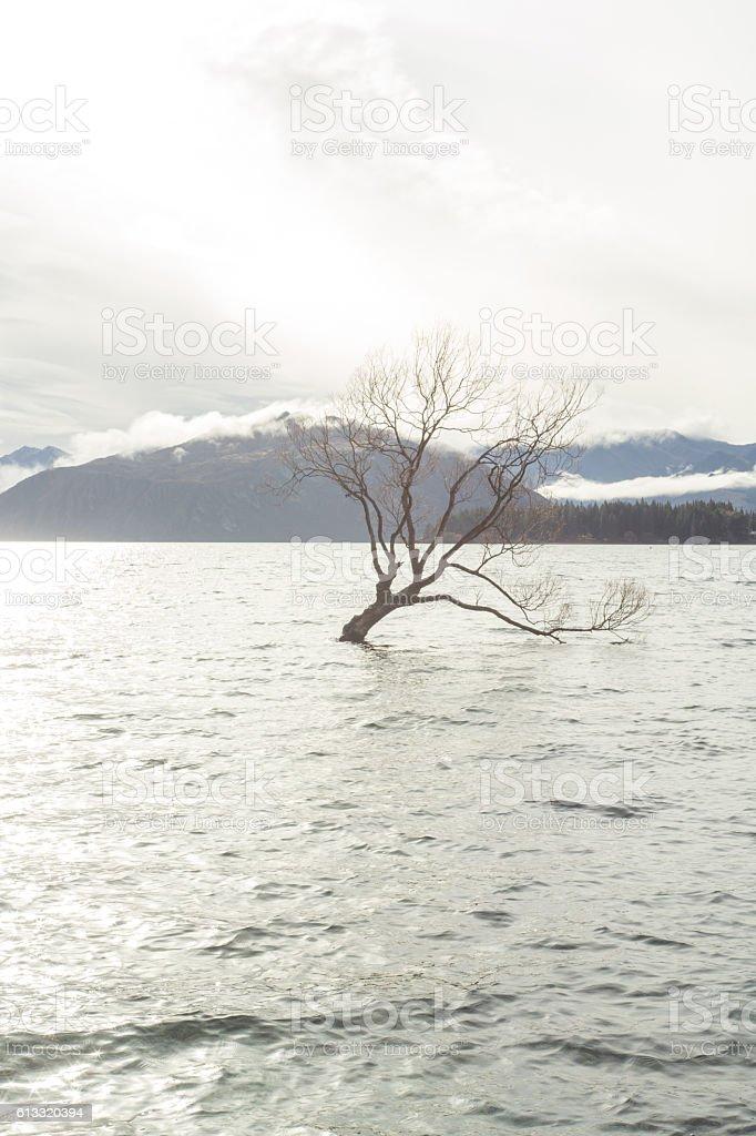 Lone tree on lake Wanaka, New Zealand stock photo