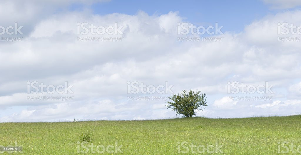 Lone tree panorama royalty-free stock photo
