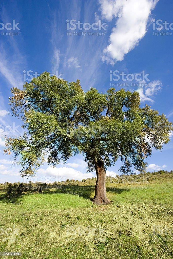 Lone Tree royalty-free stock photo