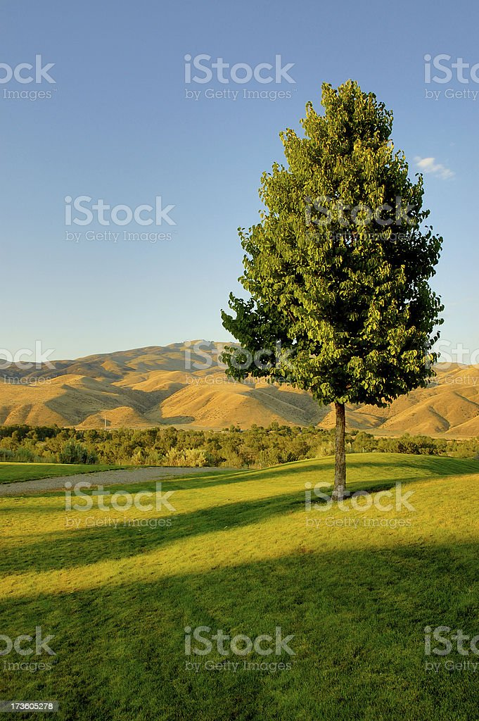 Lone tree royalty-free stock photo