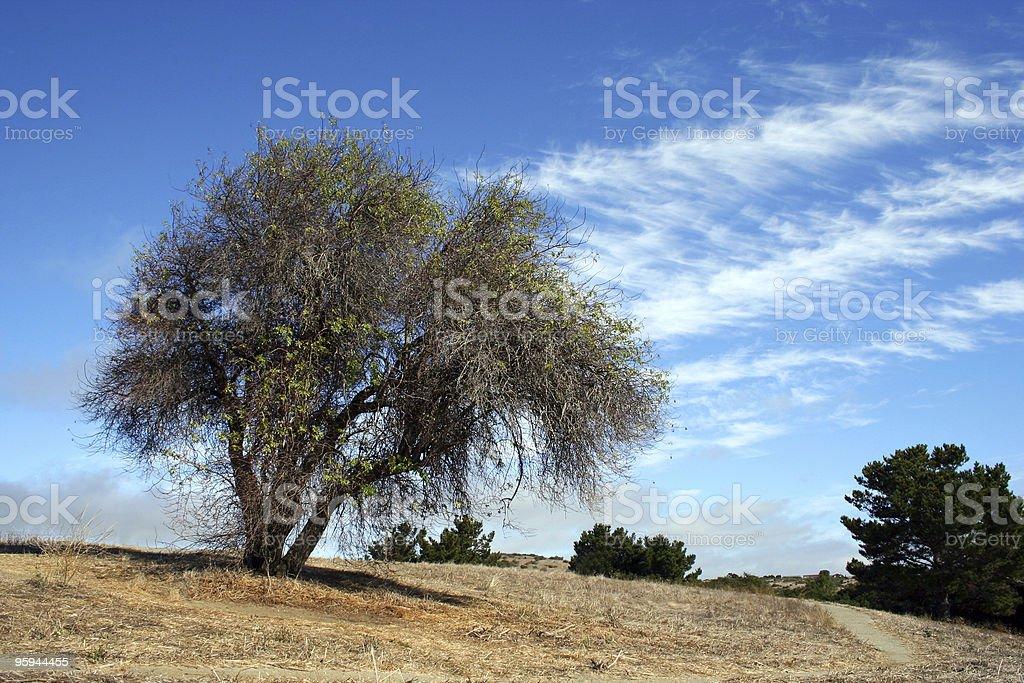 Lone tree photo libre de droits