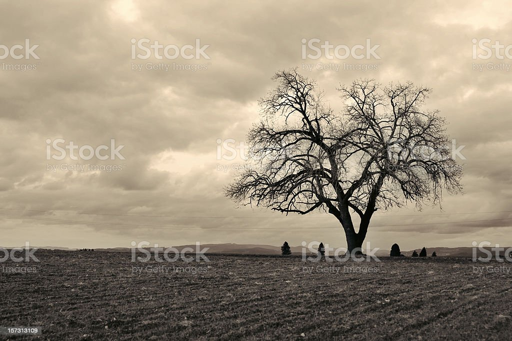 Lone tree series royalty-free stock photo
