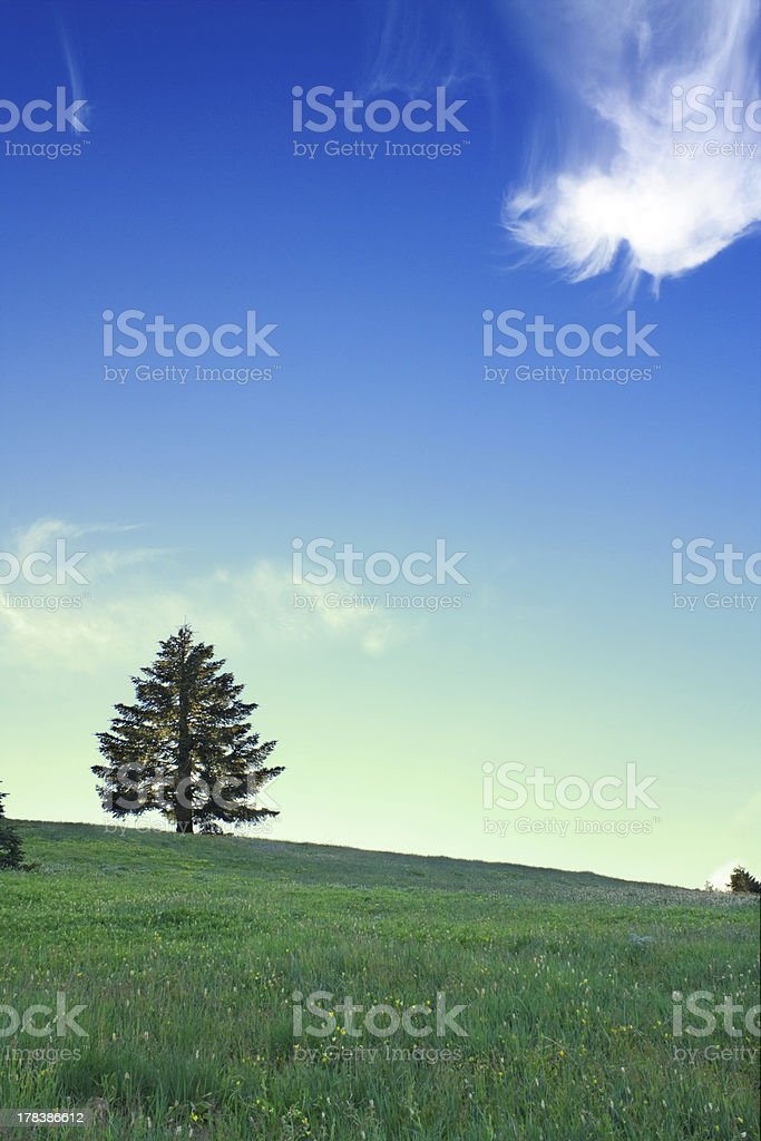 Lone tree under dancing clouds stock photo