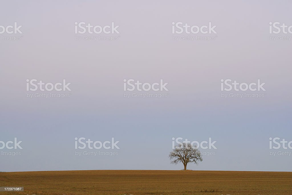 Lone Tree Under Smog stock photo