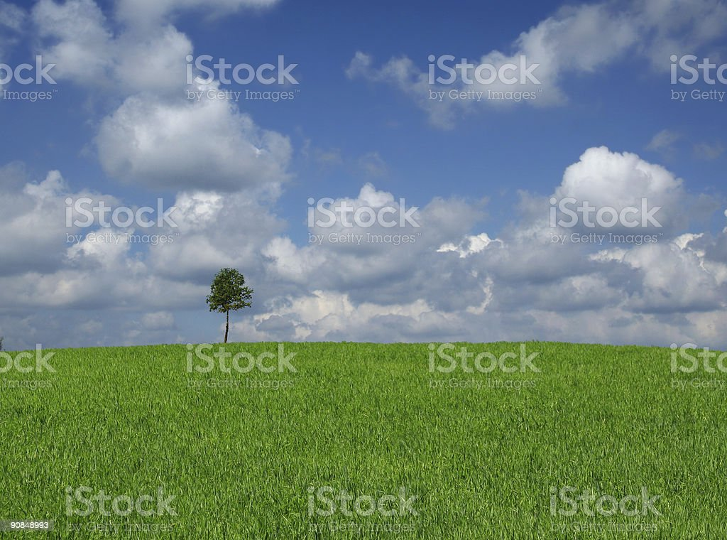 lone tree with cumulus clouds royalty-free stock photo