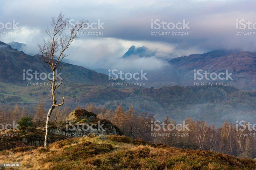Lone Tree With Misty/Foggy Background. stock photo