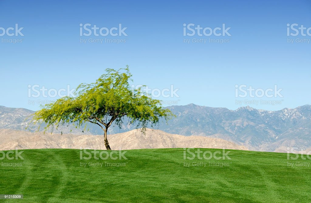 Lone Tree with Mountain Backdrop royalty-free stock photo