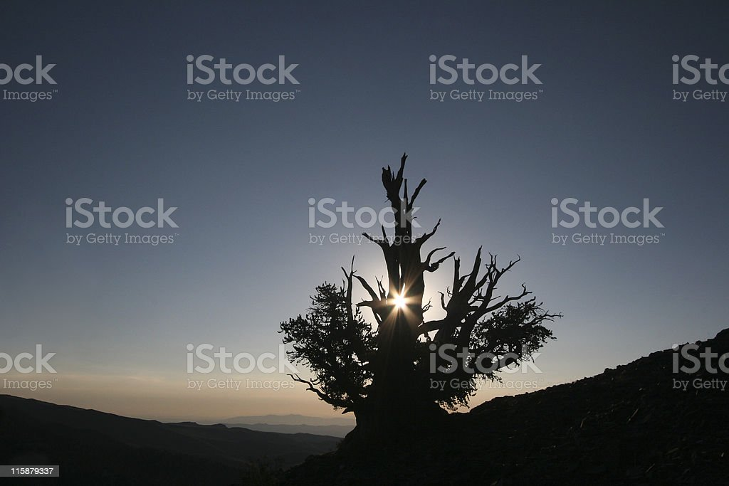 Lone Tree With Room For Text royalty-free stock photo