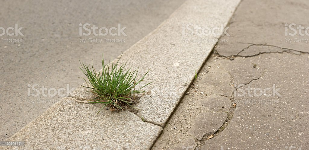 Lone tussock in a city street stock photo