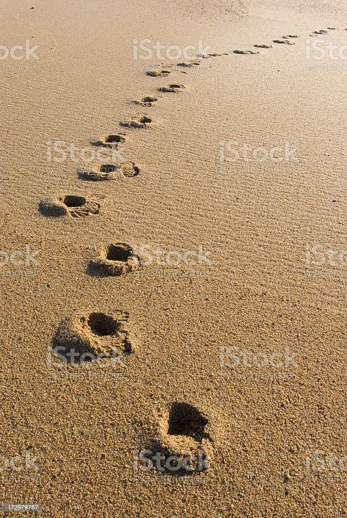 Lone visitor to desert beach stock photo
