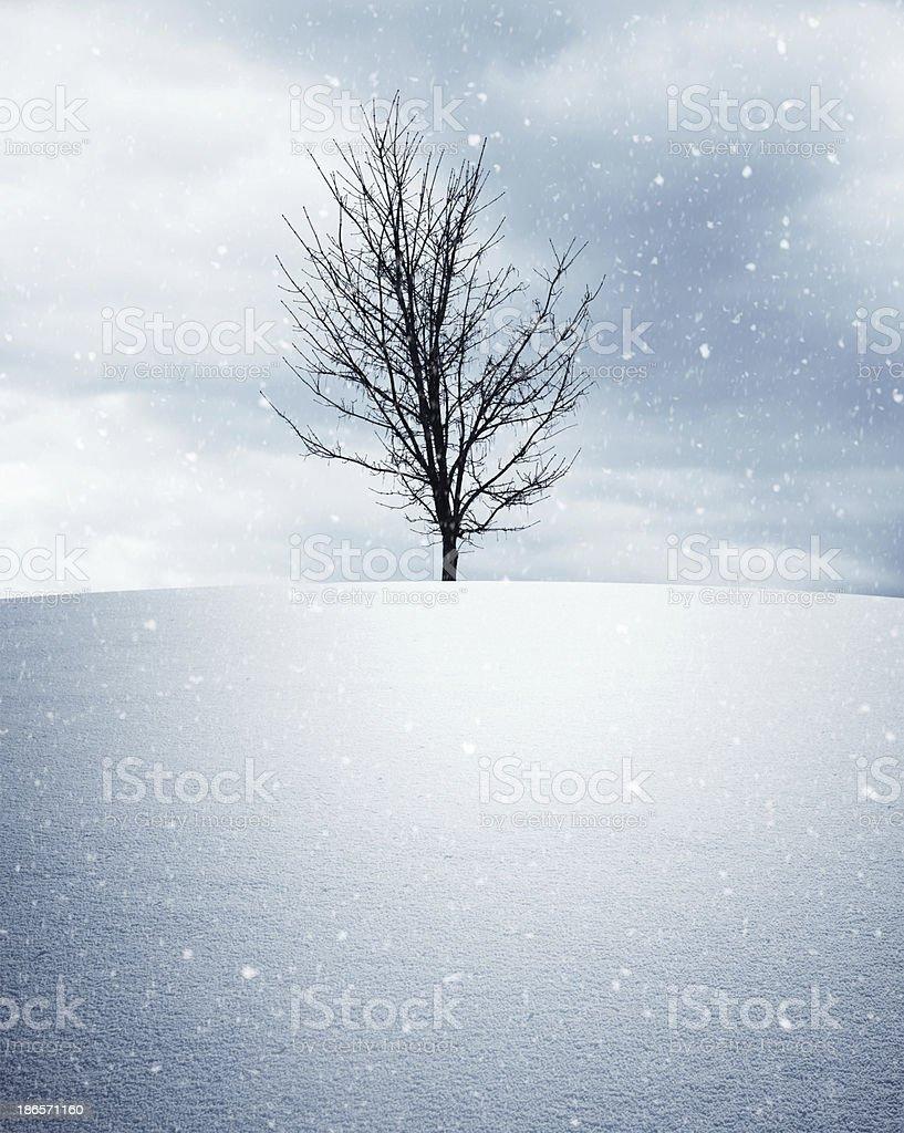 Lone Winter Tree stock photo