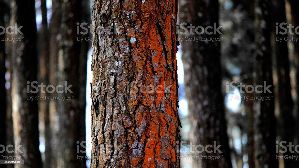 Lone Woods stock photo