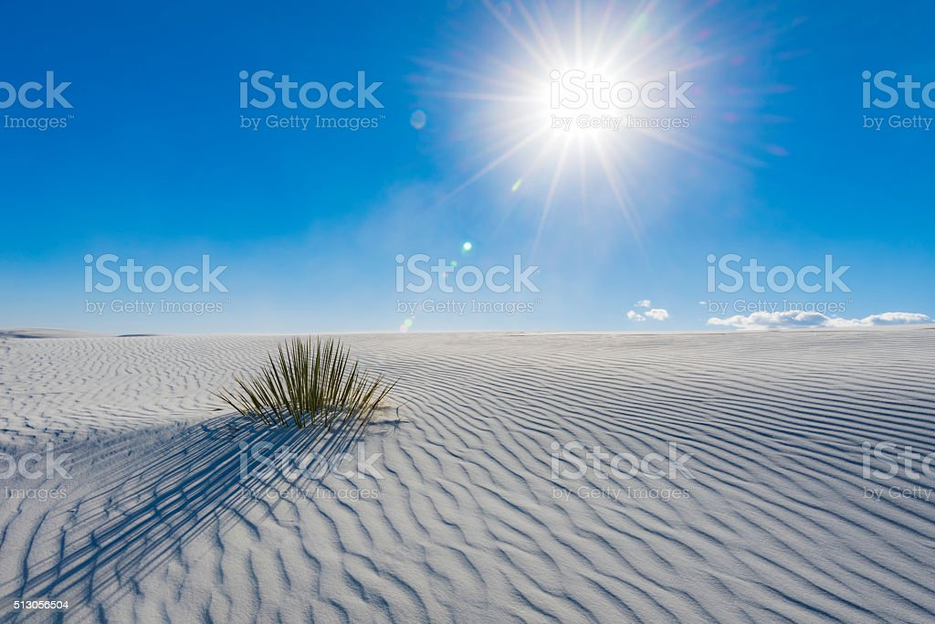Lone yucca on sand dune with star effect sun stock photo