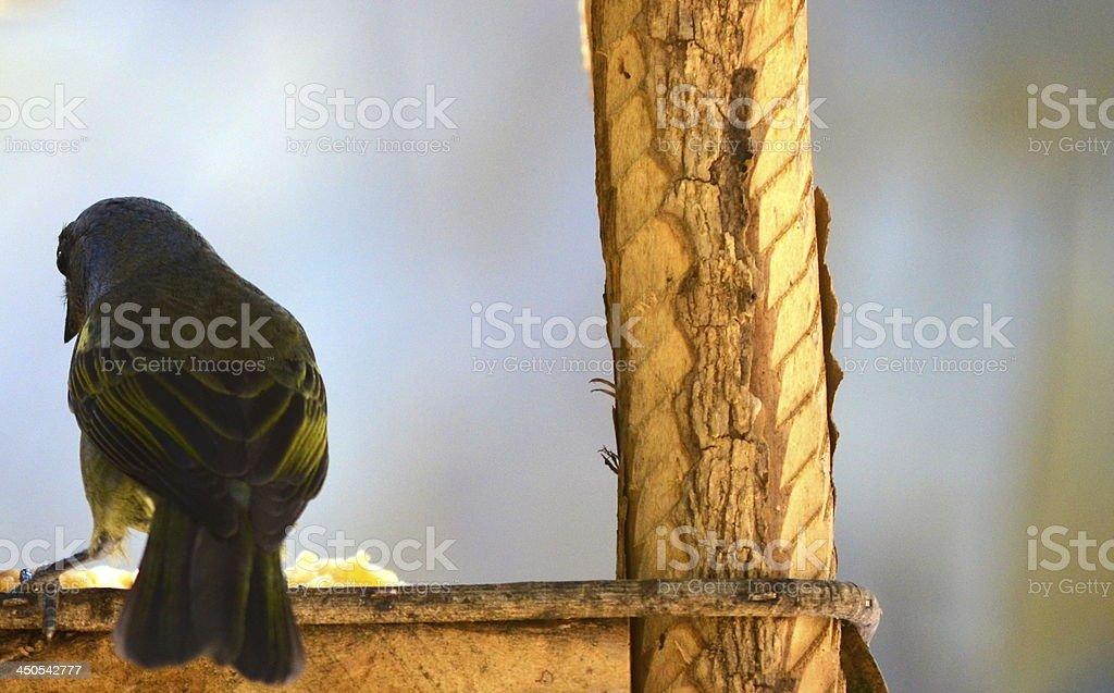 Einsamkeit Vogel Essen Lizenzfreies stock-foto