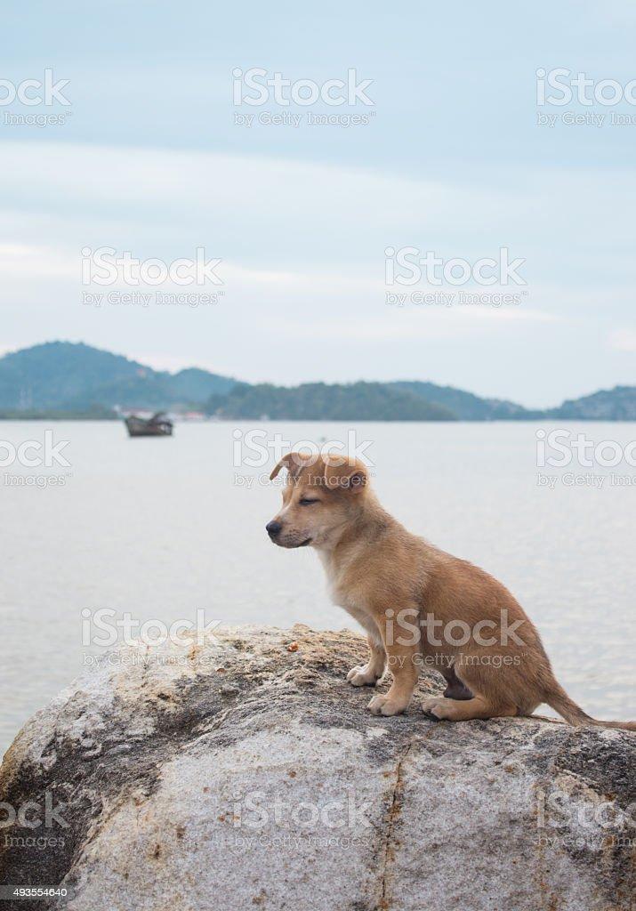 Одиночество Собака на пляже Стоковые фото Стоковая фотография