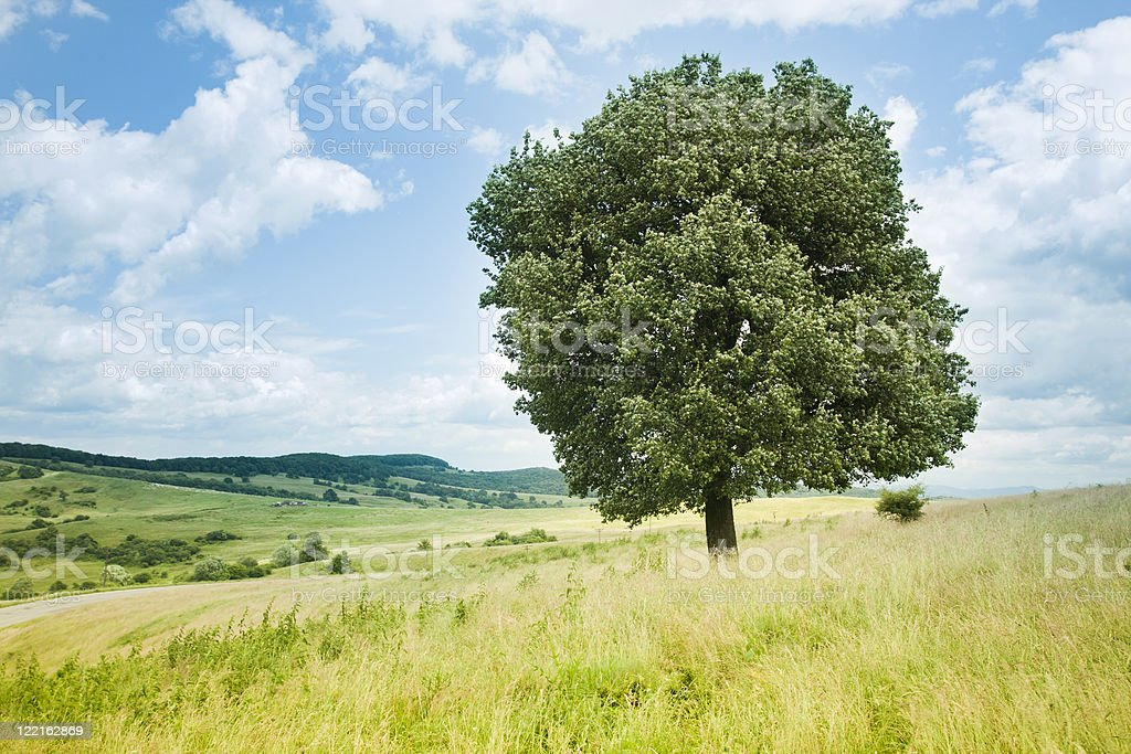 Lonelly tree stock photo