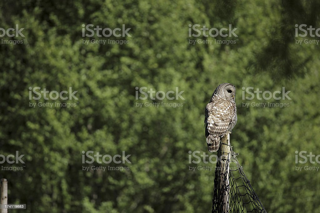 Lonely alert owl standing on a log stock photo