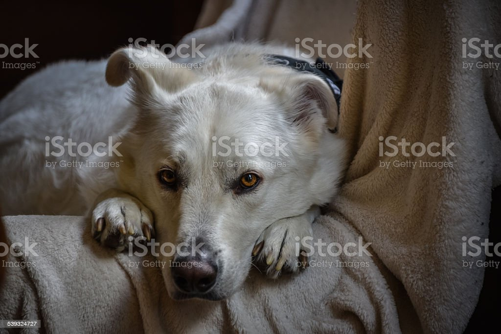 Lonely and loyal friend awaits his master. stock photo