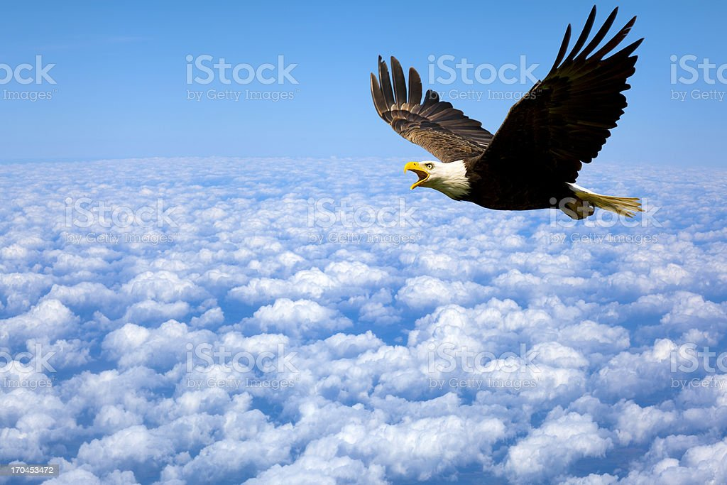 Lonely At The-Top; Bald Eagle King of The Sky stock photo