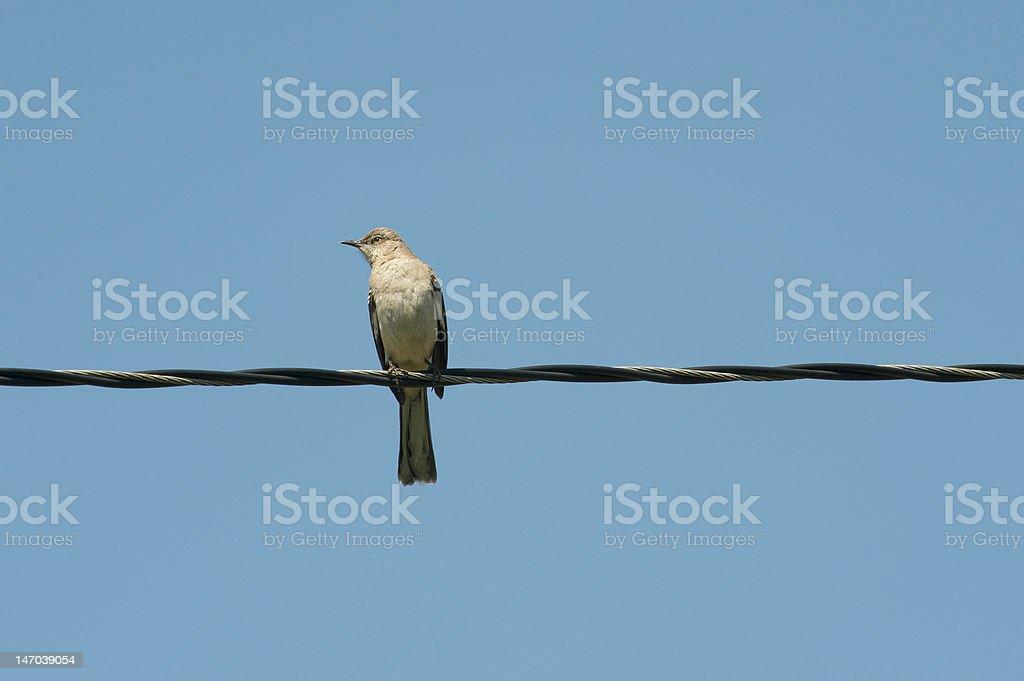 Lonely Bird royalty-free stock photo