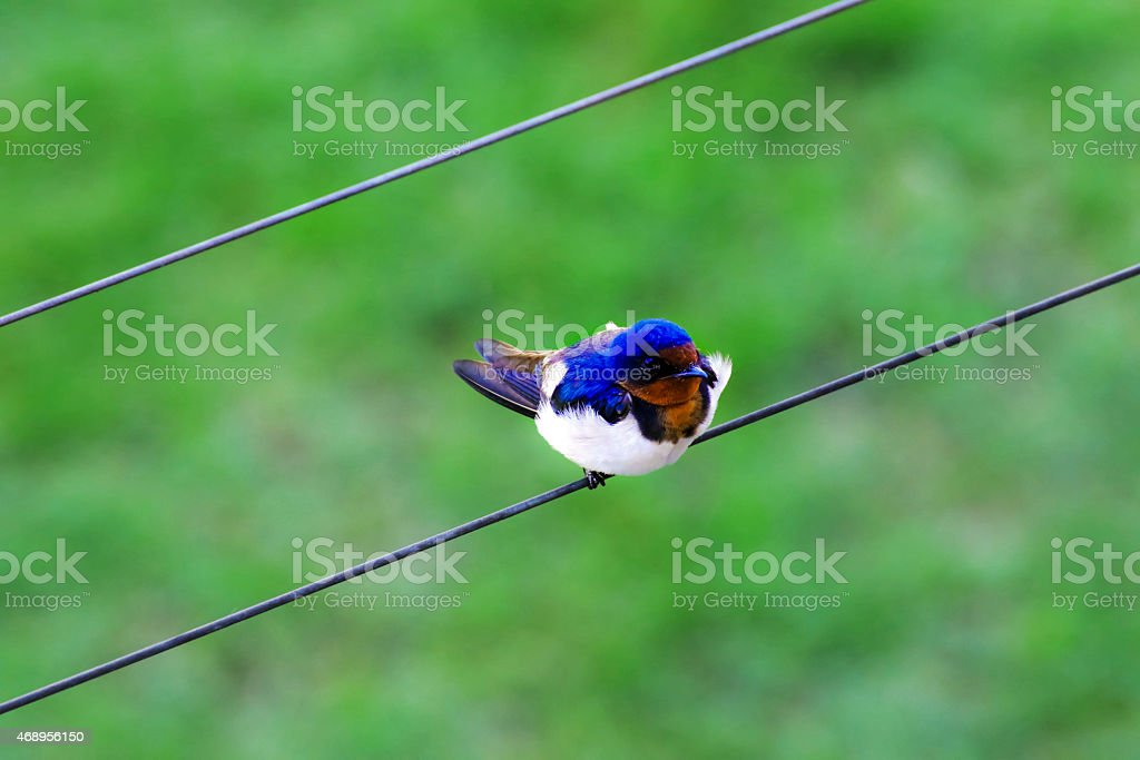 Lonely bird. stock photo