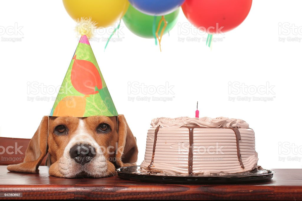 Lonely Birthday royalty-free stock photo