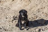 Lonely black dog with sad eyes sitting