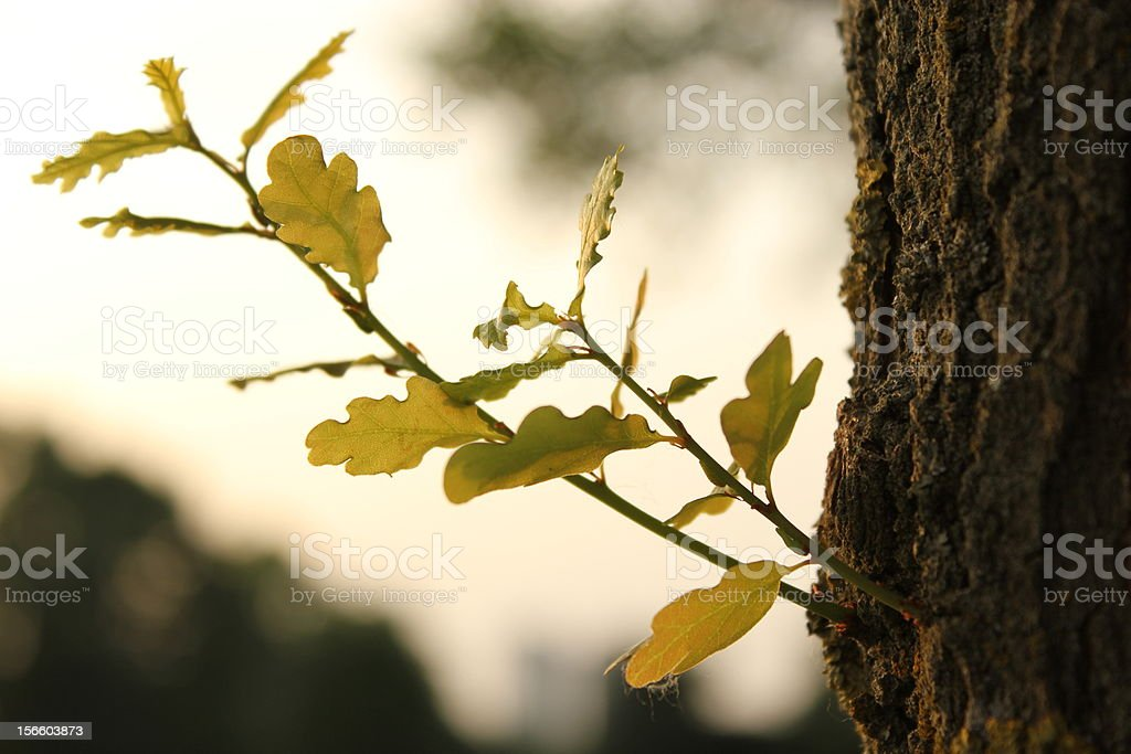 Lonely brunch in autumn royalty-free stock photo