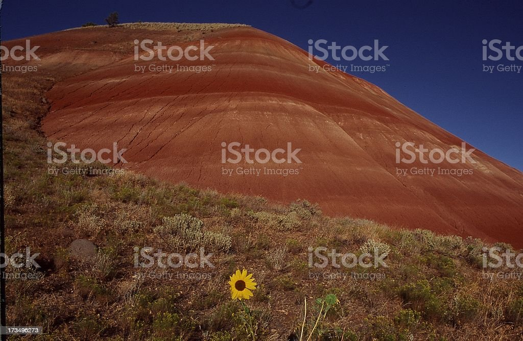 Lonely Buttercup stock photo