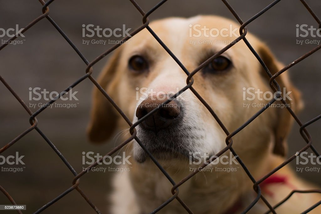 Lonely caged dog in exile stock photo