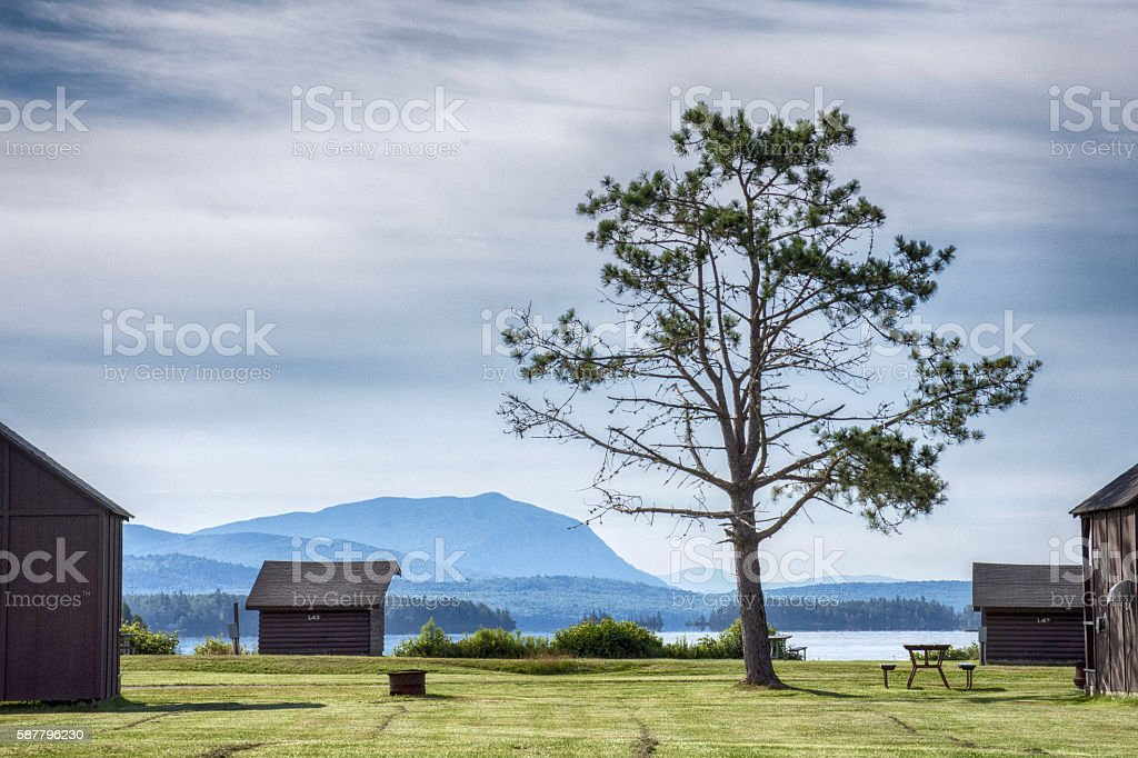 Lonely campground tree stock photo