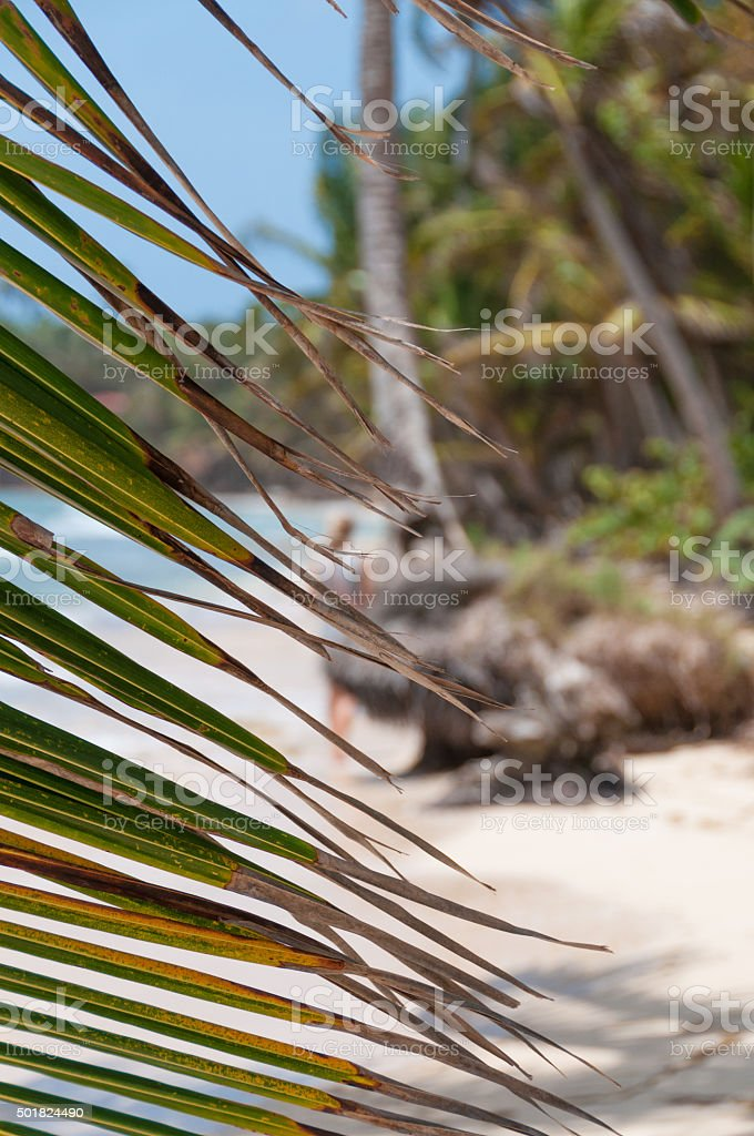 Lonely caribbean white sand beach and coconut palm trees behind stock photo