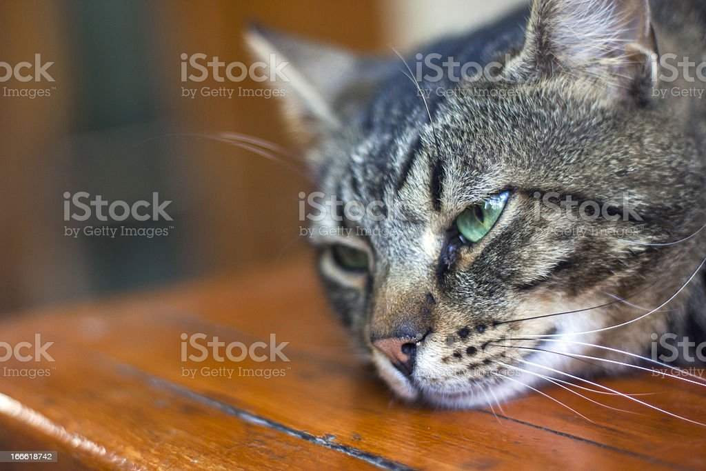 Lonely Cat royalty-free stock photo