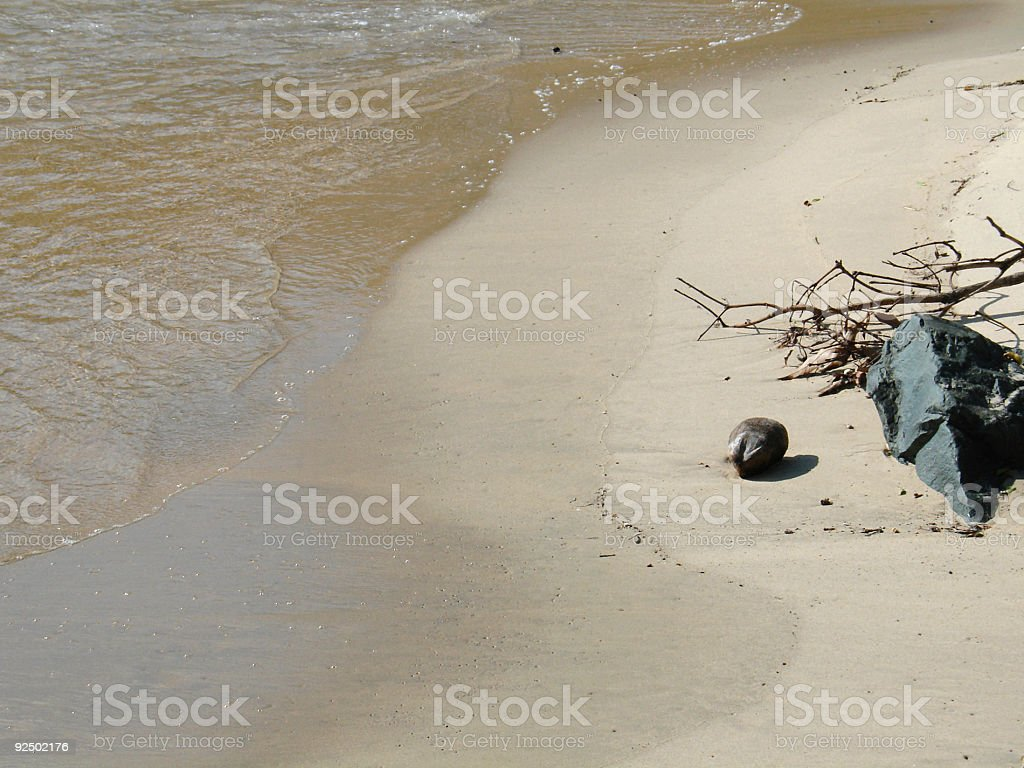 Lonely Coconut royalty-free stock photo