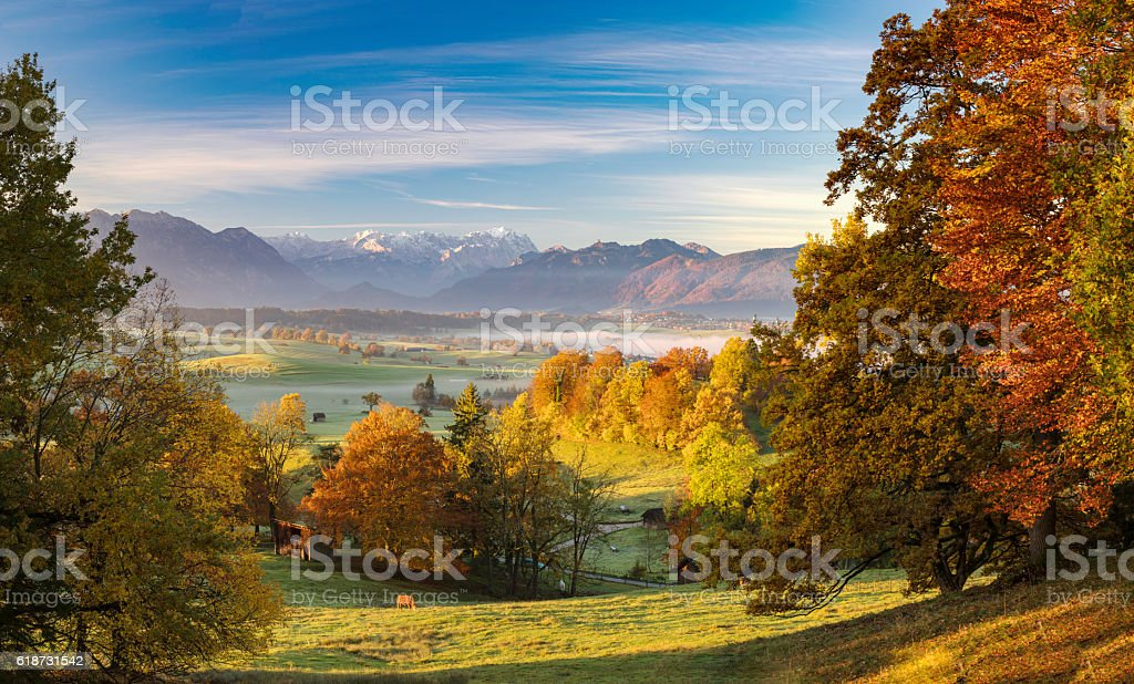Lonely cow in autumn at Riegsee with Zugspitze in Background stock photo