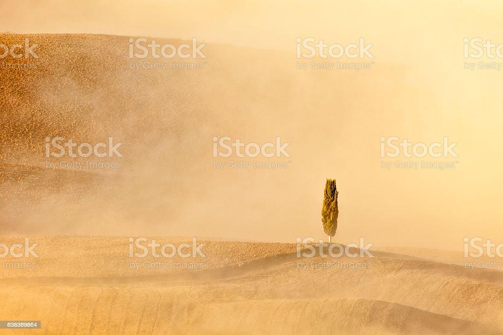 Lonely Cypress Tree in Foggy Landscape, Tuscany, Italy stock photo