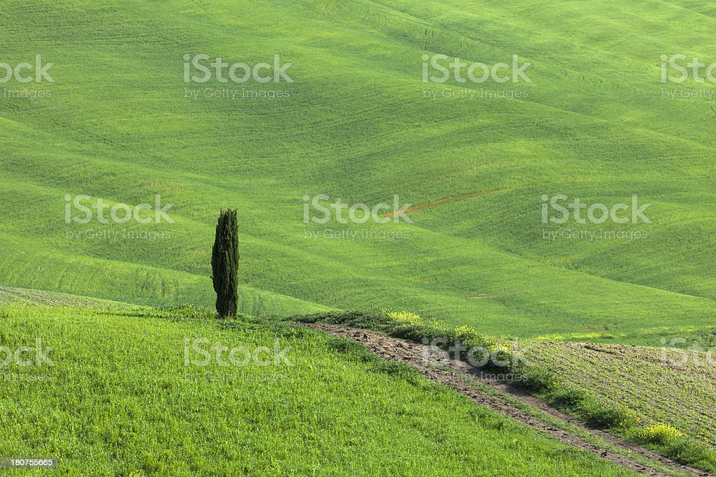 Lonely Cypress Tree, Rolling Hills, Country Road, Tuscany, Italy stock photo