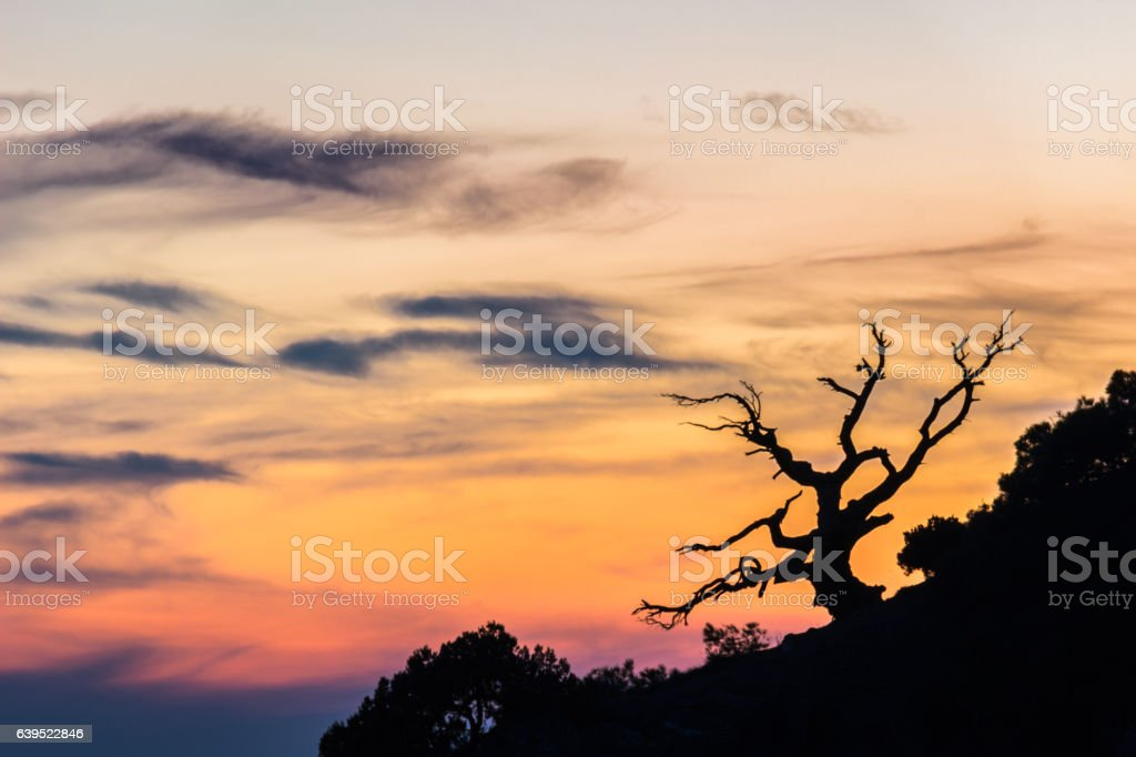 Lonely dead scary tree and colorful sunset pinkish sky. stock photo